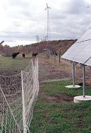 Cross Island Farm wind turbine seen with cows