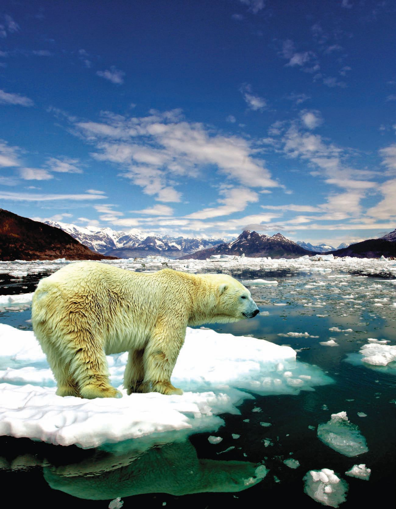 Image of Polar Bear standing on melting ice surrounded by water.